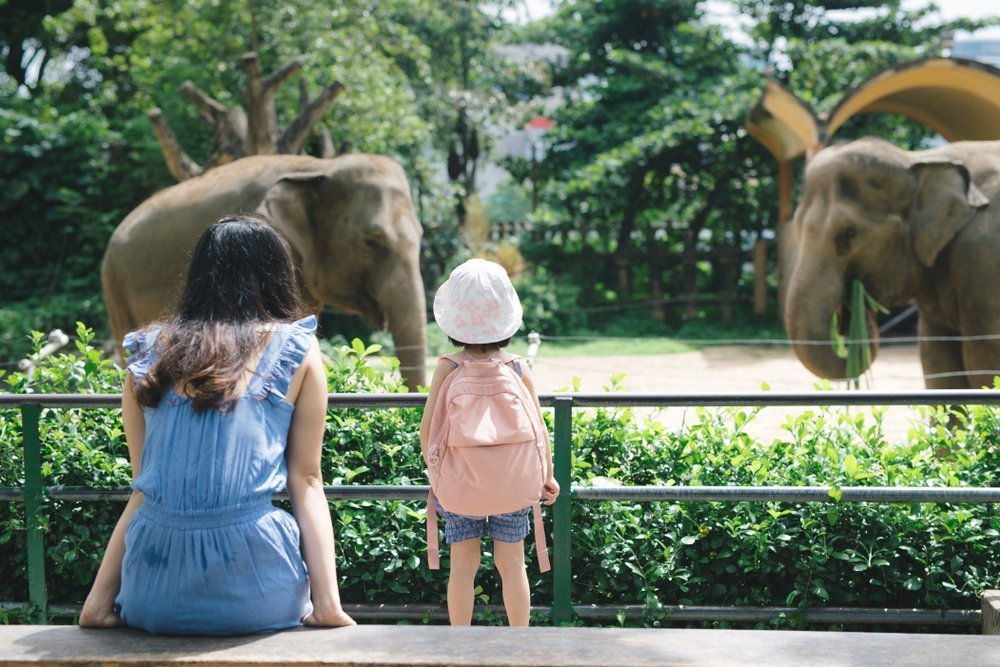 Entertaining Outings The Whole Family Will Enjoy Visit The Zoo