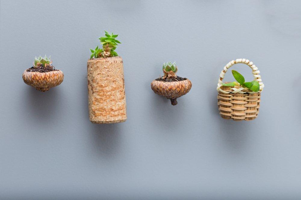 Succulent Fridge Magnets