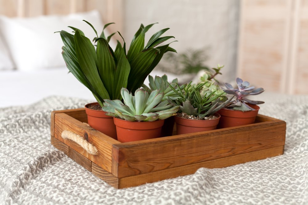 Eco-Friendly Home Décor Ideas Buy Sustainably Sourced Items
