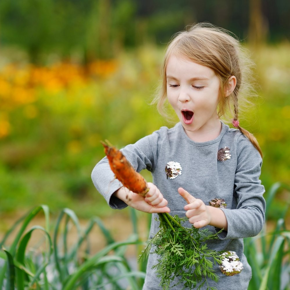 Fun Homeschooling Activities To Do Outside Set Up A Vegetable Patch
