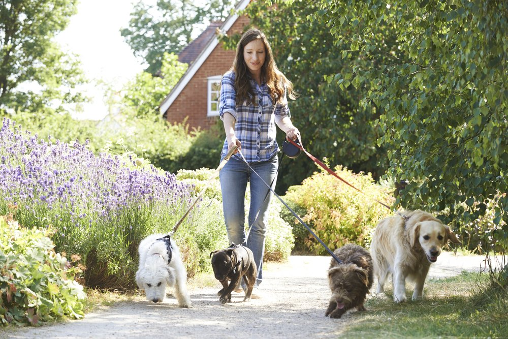 Businesses You Can Start With Next To No Money Dog Walking