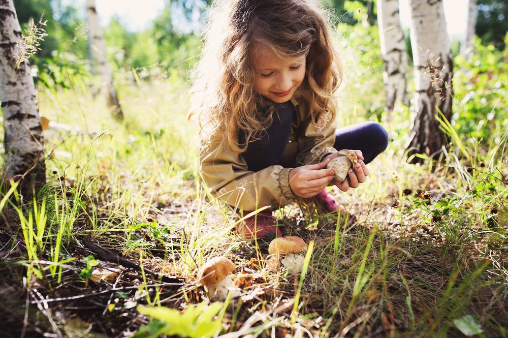 Fun Homeschooling Activities To Do Outside Identify Trees, Plants and Animals