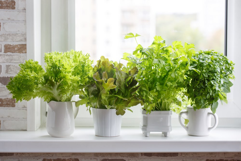 Keep An Indoor Herb Garden