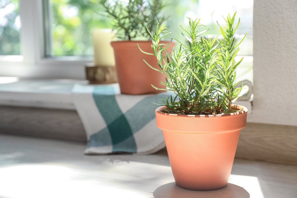 Household Plants That Are Non-Toxic To Cats And Dogs Rosemary